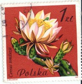 Цветущий кактус. Cereus tonduzii. Polska. 1zl.