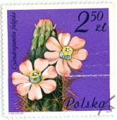 Цветущий кактус. Cylindropuntia fulgida. Polska. 2.5 zl. 1981 г. 50 RUB